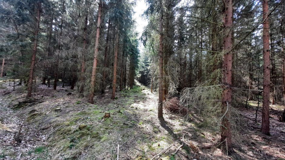 A view from the forest